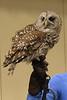 032017-BlanfordNatureCtr_Owls-DB-jm-039