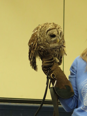 032017-BlanfordNatureCtr_Owls-DB-jm-045