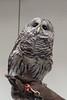 032017-BlanfordNatureCtr_Owls-DB-jm-088