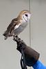 032017-BlanfordNatureCtr_Owls-DB-jm-150