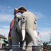 Lucy The Elephant 139th Birthday And Street Naming Ceremony