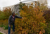 Lucinda Mays examines an American hazelnut (Corylus americana) planted between King Library and Sparks Hall at Chadron State College. (Photo by Daniel Binkard/Chadron State College)