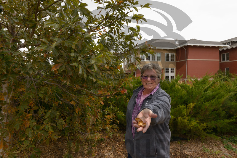 Lucinda Mays holds a buckeye shell from an Ohio buckeye (Aesculus glabra) planted near Old Admin at Chadron State College. (Photo by Daniel Binkard/Chadron State College)