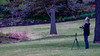 Meadowlark-2803-Edit