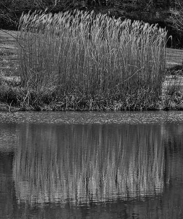 Meadowlark-1094-Edit-2
