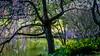 Meadowlark-0182-Edit