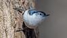 Meadowlark-0742