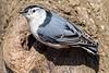 Meadowlark-0628