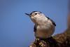 Meadowlark-0509