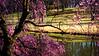 Meadowlark-3649-Edit