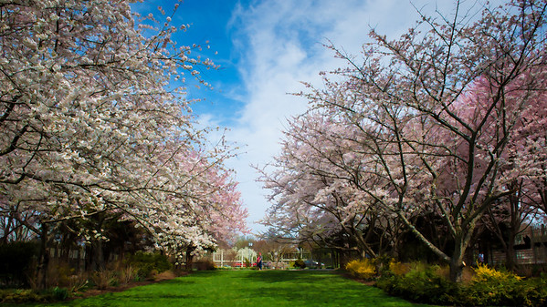 Meadow Lark Gardens-1253-Edit-2