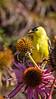 Meadowlark-4780