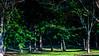 Meadowlark-4421-Edit