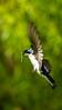 Meadowlark-0180