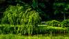 Meadowlark-0047-Edit