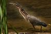 Meadowlark-1726