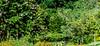 Meadowlark-3073-Edit