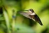 Meadowlark-8302