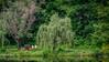 Meadowlark-1059-Edit