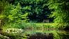 Meadowlark-1056-Edit