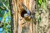 Meadowlark-0571
