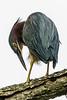 Meadowlark-0271