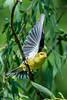 Meadowlark-0642