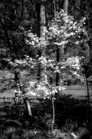 Meadowlark-7094-Edit-Edit