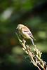 Meadowlark-1495