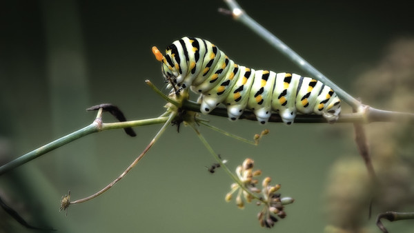 untitled-2249-Edit