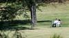 Meadowlark-9244