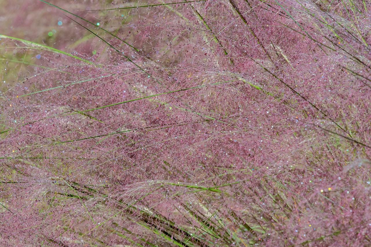 Meadowlark-0152