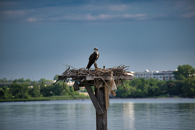 Hawk's Nest 2