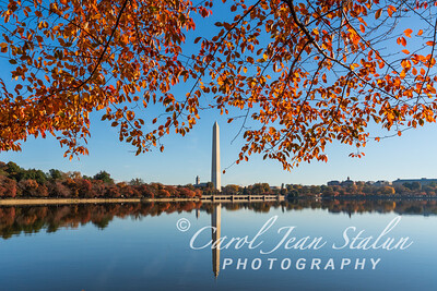 DC Fall-9887