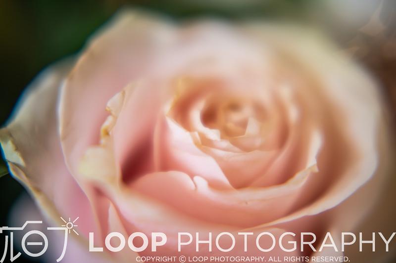 20_LOOP_C&D_HighRes_022