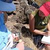 Tropicbird monitoring, Saba (February 2013)