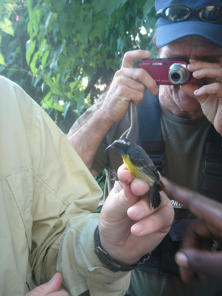 2008 Bird Monitoring St. Eustatius