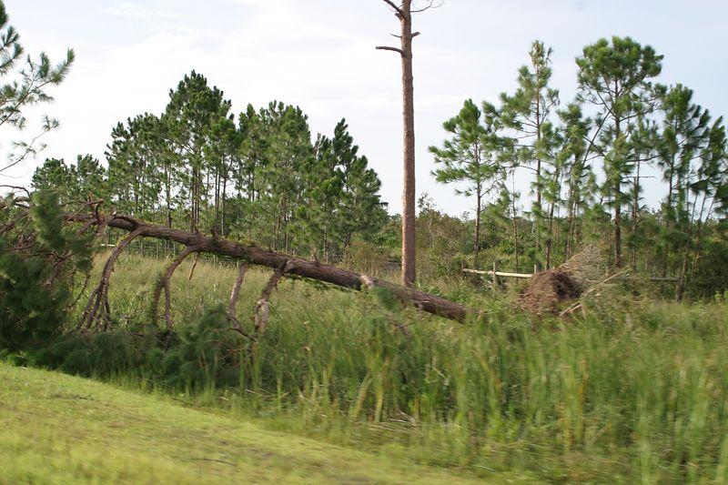 Hurricane 15 Aug 2004 023