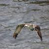 Osprey wfish 104
