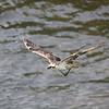 Osprey wfish 103
