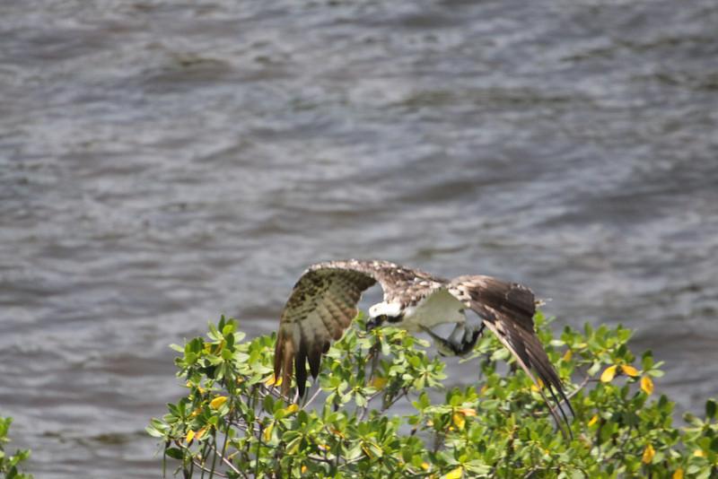 Osprey wfish 106