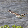 Osprey wfish 105