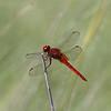 Dragon Fly 061