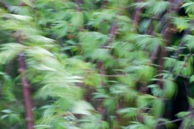 d_2009_04_1500
