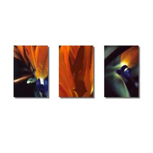 Pflanzenwelten | Triptychon Strelitzie