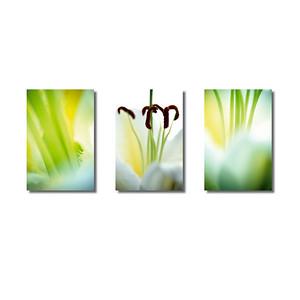 Pflanzenwelten | Triptychon Weiße Lilie I