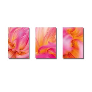 Pflanzenwelten | Triptychon Dahlie III