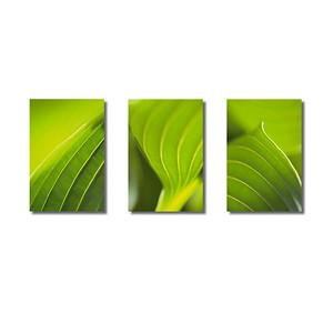 Pflanzenwelten | Triptychon Herzlilie