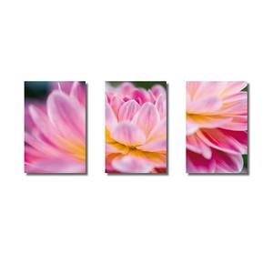 Pflanzenwelten | Triptychon Dahlie II