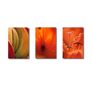 Pflanzenwelten | Triptychon African Tulip